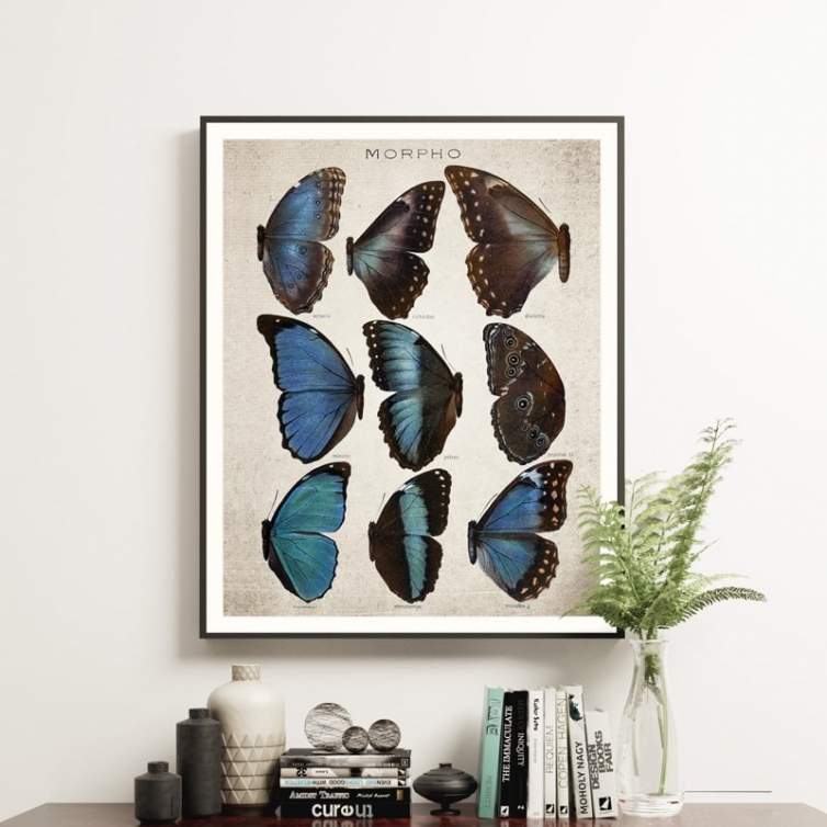 Vintage Entomology Giclee Print (Morpho Collection 2 Plate From 1867)