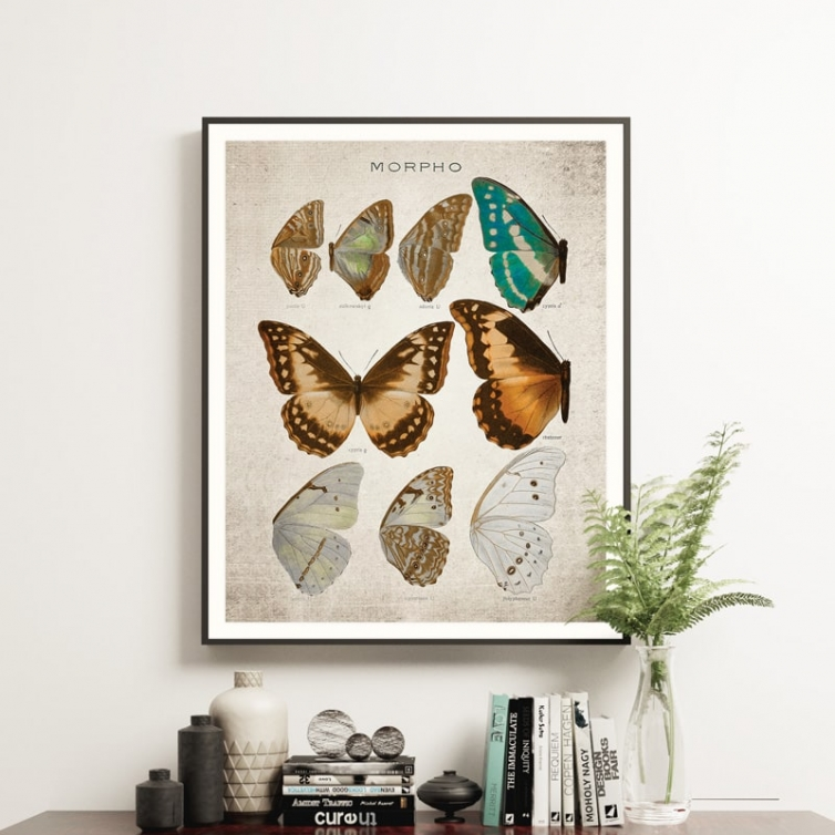 Vintage Entomology Giclee Print (Morpho Collection 1 Plate From 1867)