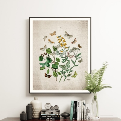 Vintage Entomology Giclee Print (British Butterflies Two Plate From 1882)