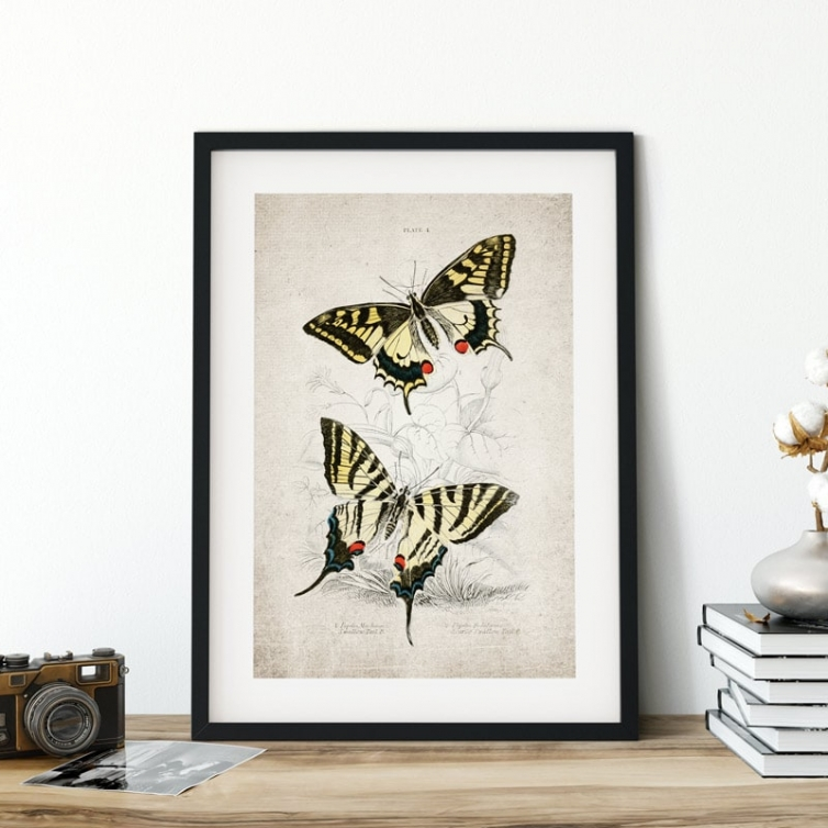 Vintage Entomology Giclee Print (Papilio machaon 1835)