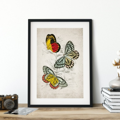Vintage Entomology Giclee Print (Piers Epicharis 1835)