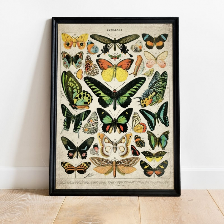 Minibeast Vintage Entomology Giclee Print (Butterflies and Moths Plate 2 From 1907)
