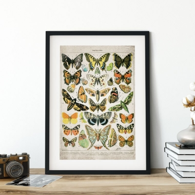 Vintage Entomology Giclee Print (Butterflies and Moths Plate From 1907)