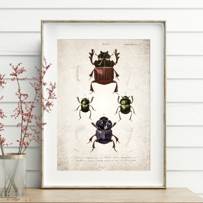 Vintage Entomology Giclee Print (Beetle Group Plate From 1907)