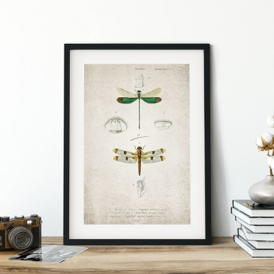 Vintage Entomology Giclee Print (Dragonflies Plate From 1907)