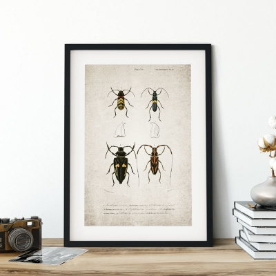 Vintage Entomology Giclee Print (Beetle Quartet Plate From 1907)