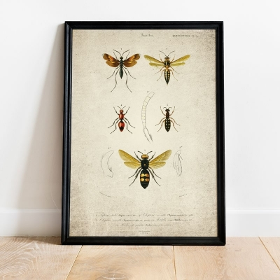 Vintage Entomology Giclee Print (Wasp Plate From 1907)