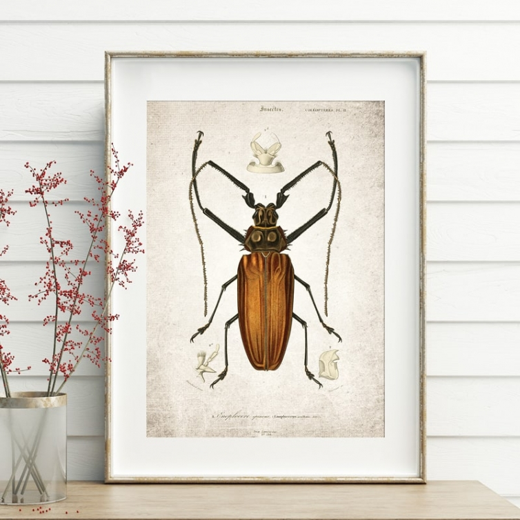 Vintage Entomology Giclee Print (Giant Beetle Plate From 1907)