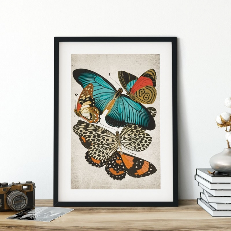 Vintage Entomology Giclee Print (Zalmoxis Plate From 1925)