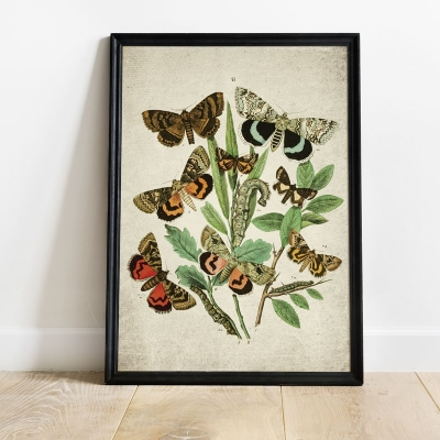 Vintage Entomology Giclee Print (European Moths Plate From 1882)