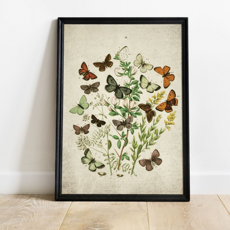 Vintage Entomology Giclee Print (British Butterflies Three Plate From 1882)