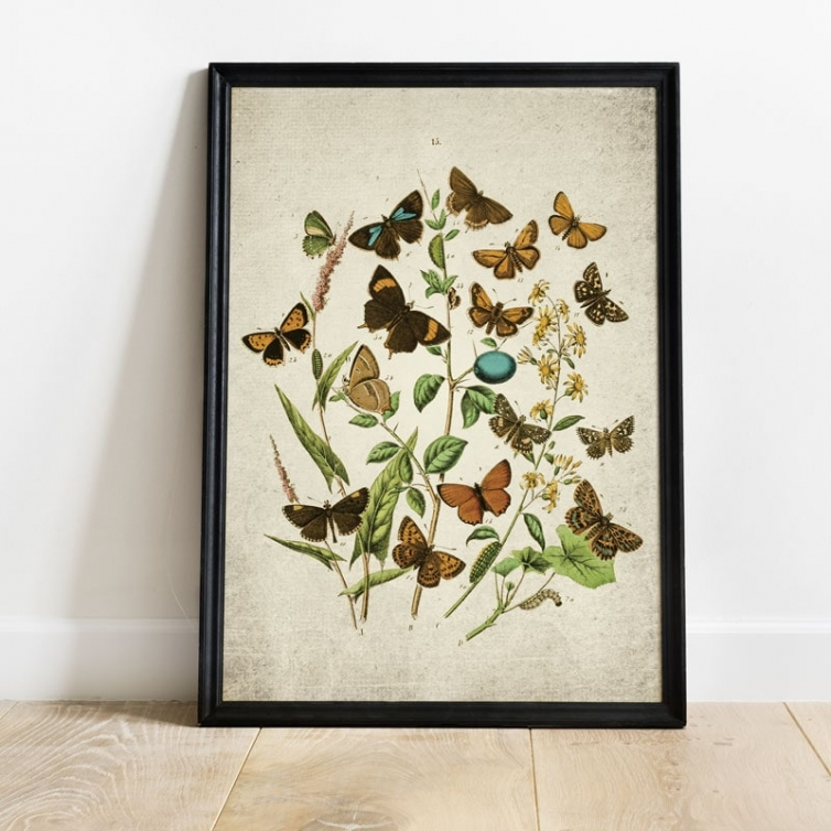 Vintage Entomology Giclee Print (British Butterflies Four Plate From 1882)