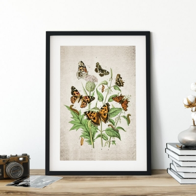 Vintage Entomology Giclee Print (European Butterflies Plate From 1882)