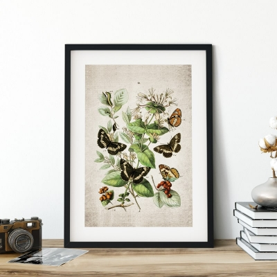 Vintage Entomology Giclee Print (European Butterflies Two 1882)