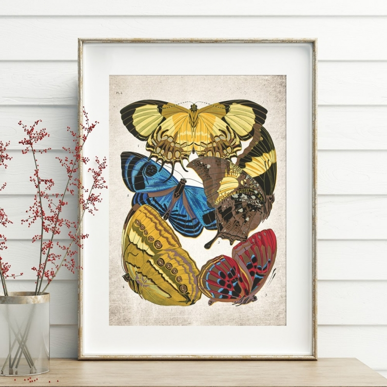 Vintage Entomology Giclee Print (Papilio Scene #1 from 1925)