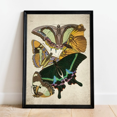 Vintage Entomology Giclee Print (Papilio Scene #6 from 1925)