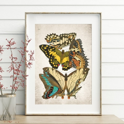 Vintage Entomology Giclee Print (Papilio Scene #7 from 1925)