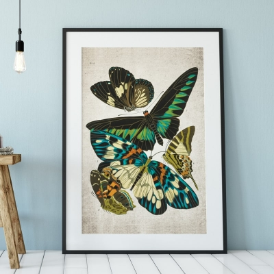 Vintage Entomology Giclee Print (Papilio Scene #8 from 1925)