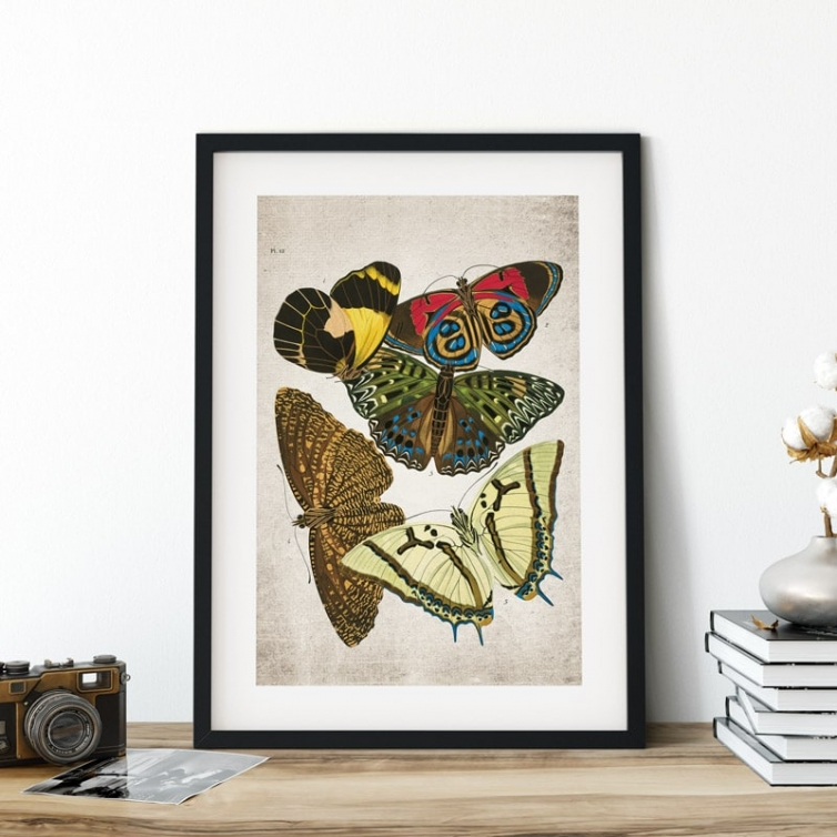 Vintage Entomology Giclee Print (Papilio Scene #9 from 1925)